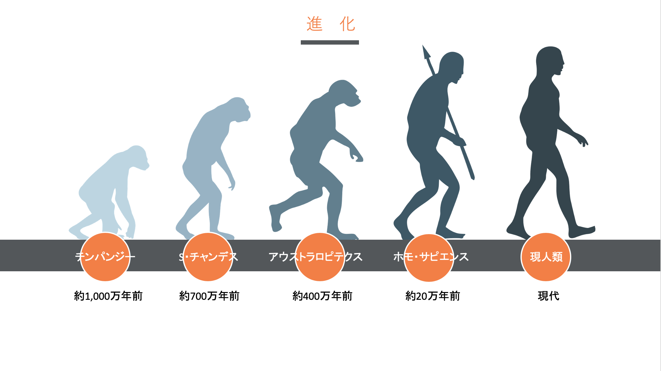 人類の進化の過程